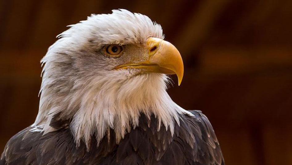 Птицы фото с названиями орел